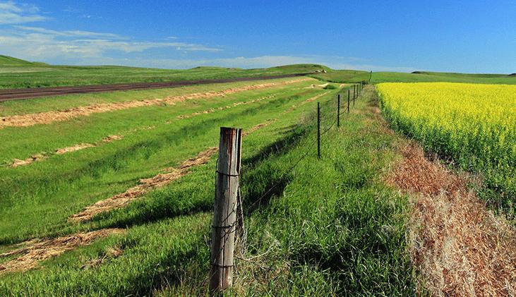 Rural fence-line